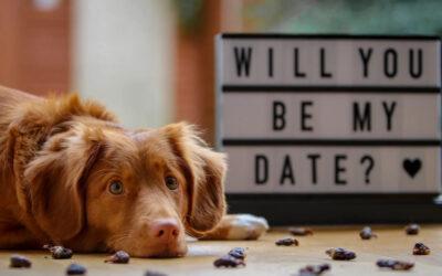 No Pressure Valentine's Day