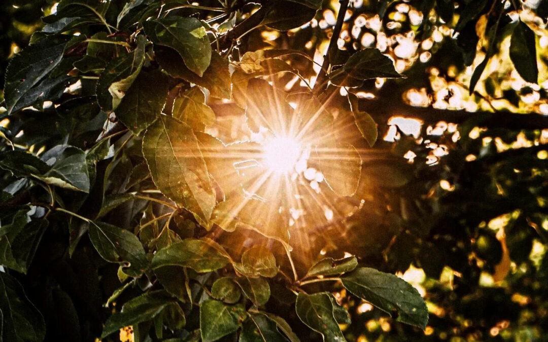 sun, best online counseling in Colorado, addiction counseling in Ambler, PA, christian online counseling in Colorado