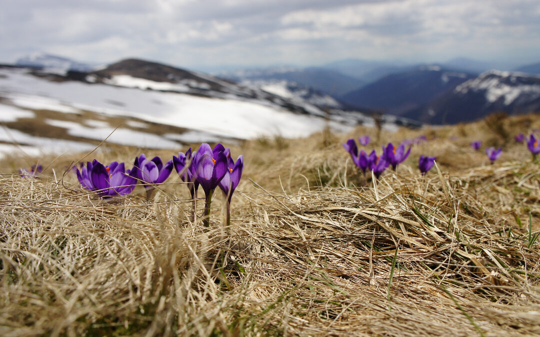 4 Things Waiting For Spring Can Teach Us About Self Improvement